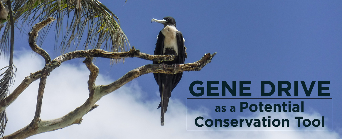 island-conservation-genetic-biocontrol-invasive-species-crispr-feat2