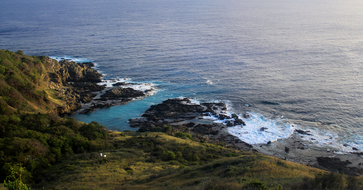 island-conservation-invasive-species-preventing-extinctions-gbird-gene-drive-desecheo-island