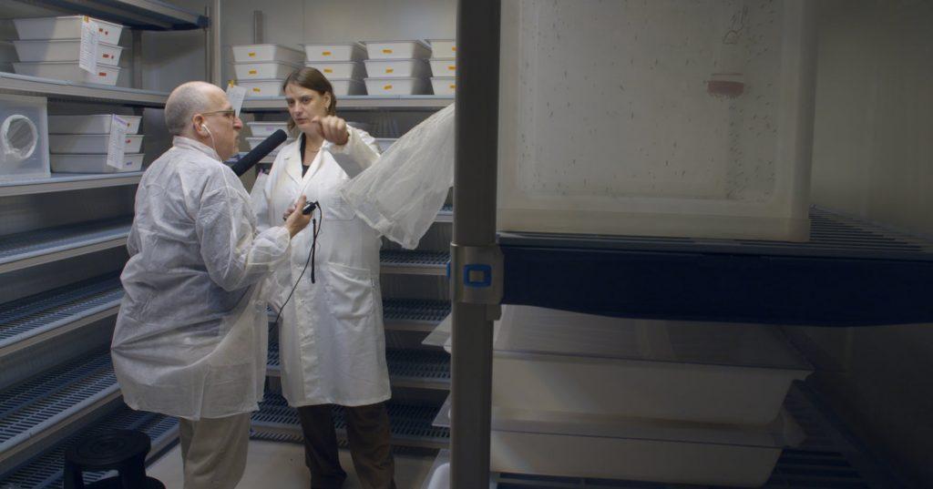 genetic-biocontrol-invasive-rodents-npr-gene-drive-mosquito-lab-ruth-mueller