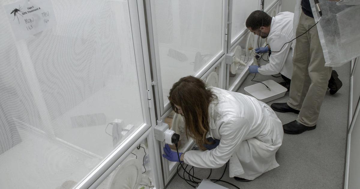 genetic-biocontrol-invasive-rodents-partnership-gene-drive-npr-feat