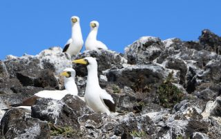 island-conservation-gbird-genetic-biocontrol-seabird-conservation-santa-cruz-works-talk